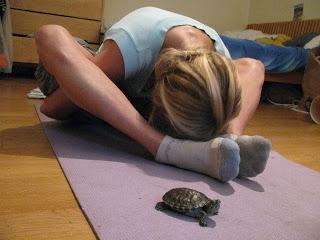 Turtle pose2